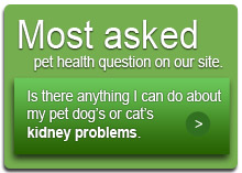 Most asked pet health question