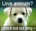 Love animals - read our blog